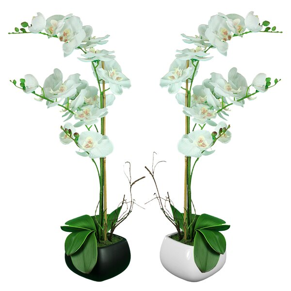 Orchid Flowering Plant in Pot (Set of 2) by Mercer41