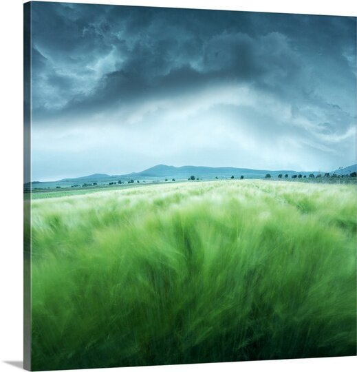 Barley Field by Floriana Barbu Photographic Print on Canvas by Canvas On Demand