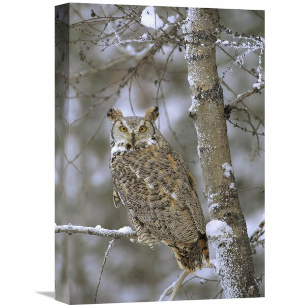 Nature Photographs Great Horned Owl in Its Pale Form Perching by Global Gallery