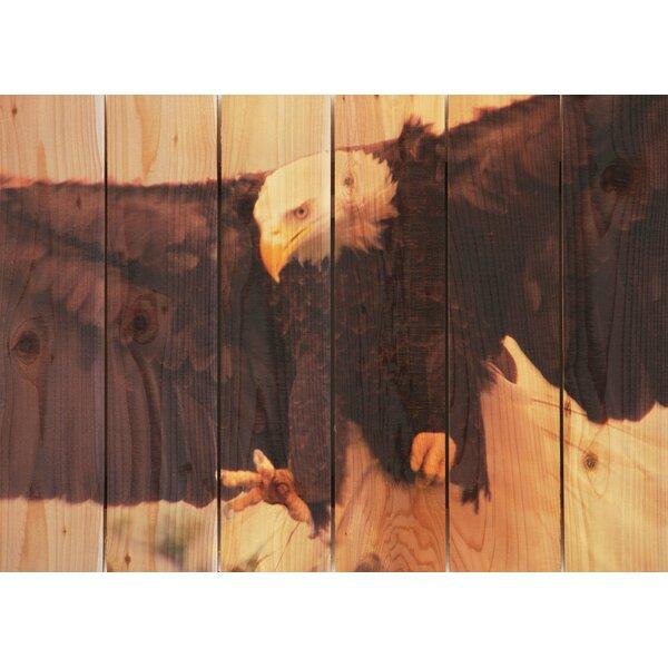 Bald Eagle Photographic Print by Gizaun Art