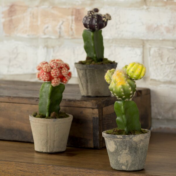 Colorful Cactus Tree in Planter (Set of 3) by Mistana