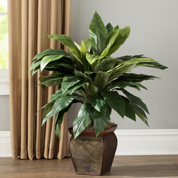 Cordyline Floor Plant in Decorative Pot by Three Posts
