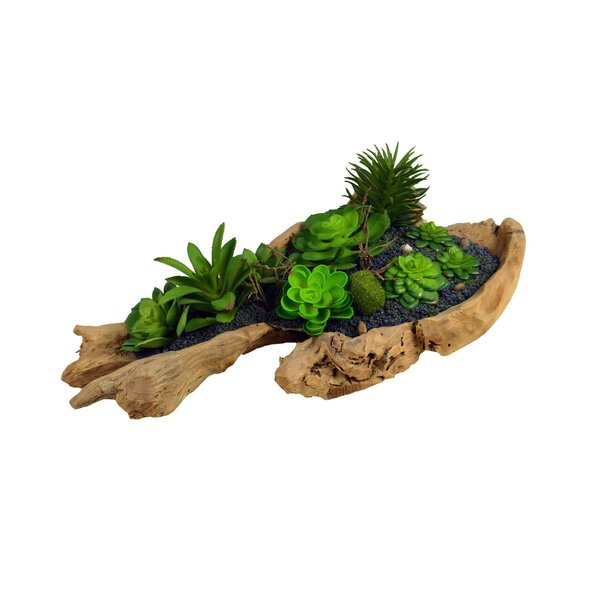 Desktop Succulent Plant in Planter by Union Rustic