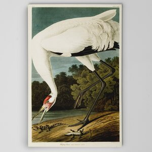 Hooping Crane by Audubon Graphic Art on Wrapped Canvas by Wexford Home