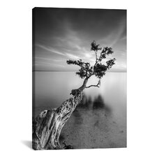 'Water Tree V' by Moises Levy Photographic Print on Wrapped Canvas