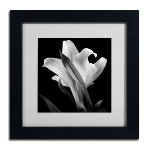 Lily by Michael Harrison Framed Photographic Print by Trademark Fine Art
