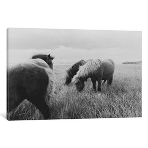 Horses on Iceland II Photographic Print on Wrapped Canvas by Alcott Hill