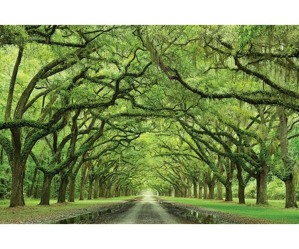 Oaks Avenue Photographic Print on Wrapped Canvas by Red Barrel Studio