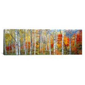 'Fall Trees, Shinhodaka, Gifu, Japan' Photographic Print on Canvas by East Urban Home