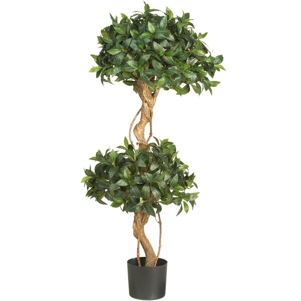 Sweet Bay Double Ball Round Topiary in Pot by Red Barrel Studio