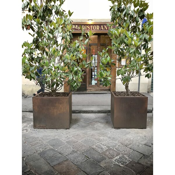 Austintown Cube Raw Corten Steel Planter Box by Bloomsbury Market
