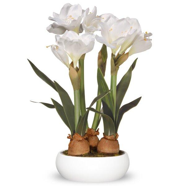Amaryllis Floral Arrangement in Pot by Ivy Bronx