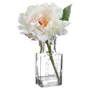 Peony in Glass Vase (Set of 12)