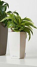 Winslow Self-Watering Plastic Pot Planter by Orren Ellis