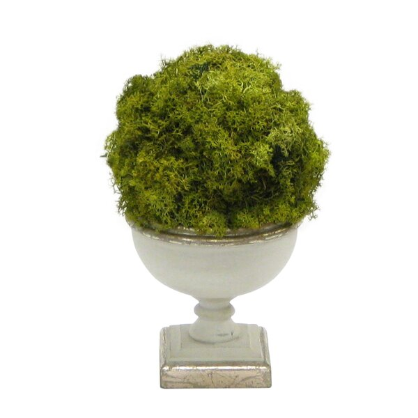 Ball Moss Topiary in Urn by Greyleigh
