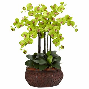 Silk flowers teal wayfair large phalaenopsis silk flower arrangement in green mightylinksfo