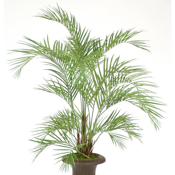 Areca Palm Tree in Pot by Distinctive Designs