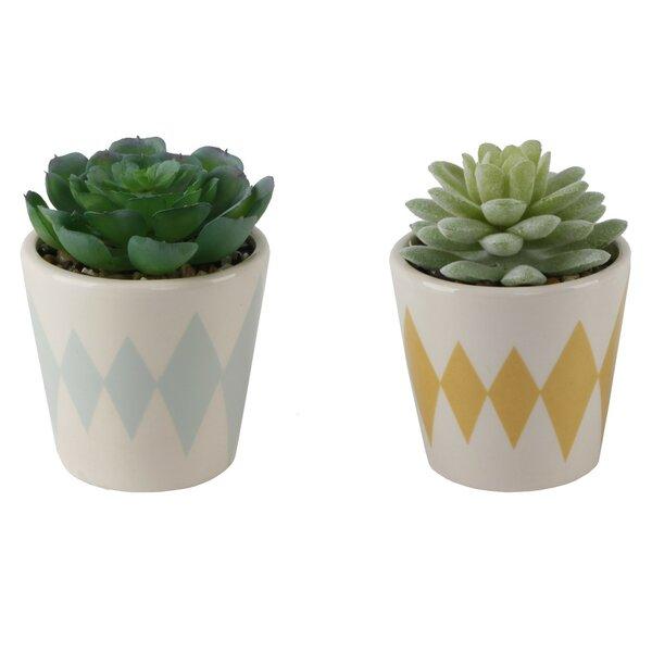 2 Piece Diamond Print Desktop Succulent Plant in Ceramic Pot Set by World Menagerie