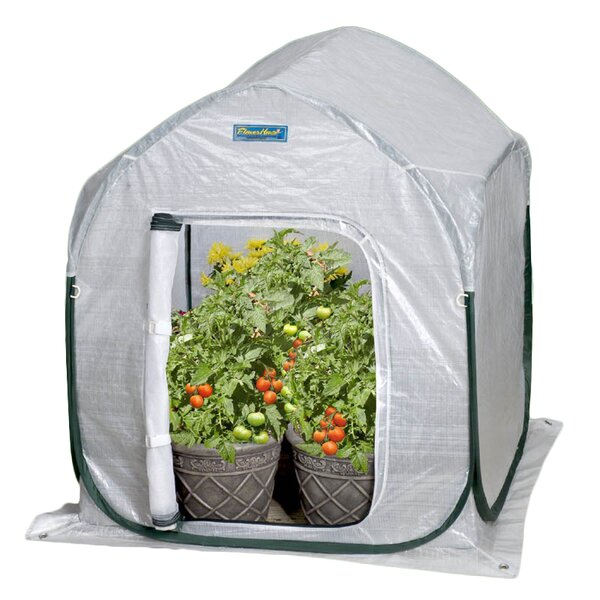 PlantHouse 2 Ft. W x 2 Ft. D Mini Greenhouse by Flowerhouse