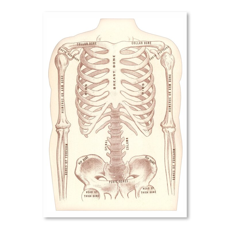 East Urban Home Bones Of The Torso And Arms Graphic Art Print
