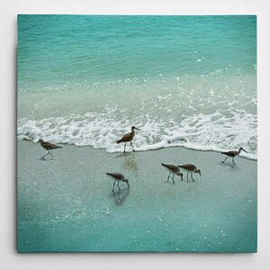 'Sandpiper Beach Party' by Nan Photographic Print on Wrapped Canvas by Wexford Home