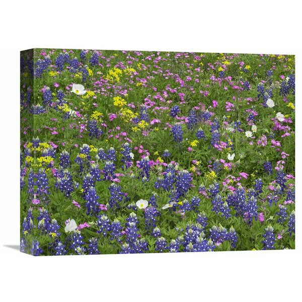Nature Photographs Sand Bluebonnet Flowers, Hill Country, Texas by Tim Fitzharris Photographic Print on Wrapped Canvas by Global Gallery