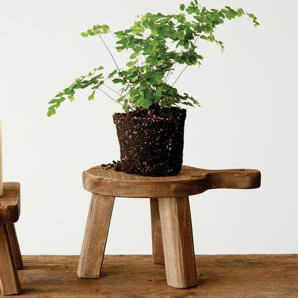 Eastlake Plant Stand by Bungalow Rose