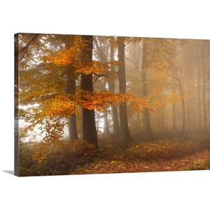 'Edge of the Woods' by Franz Schumacher Photographic Print on Canvas by Great Big Canvas
