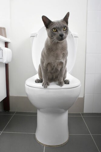 Cat Toilet Training System by Litter Kwitter