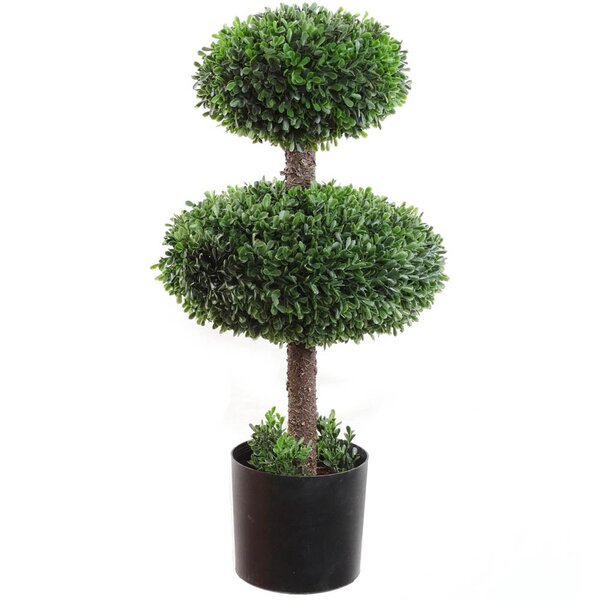 Topiary Boxwood in Pot by Larksilk