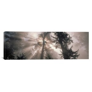 Panoramic Trees Redwood National Park, California Photographic Print on Wrapped Canvas by iCanvas