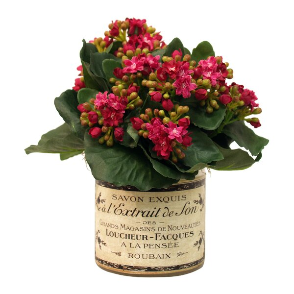Kalanchoe in French Labeled Pot by Lark Manor
