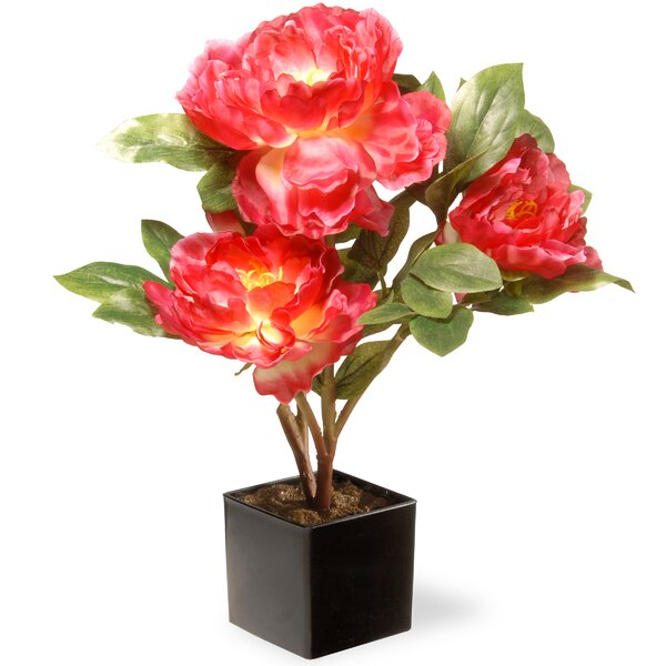 Peony Flowers in Pot by National Tree Co.