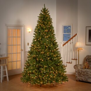 Lighted outdoor tree wayfair green spruce trees artificial christmas tree with 550 incandescent clearwhite lights aloadofball Image collections