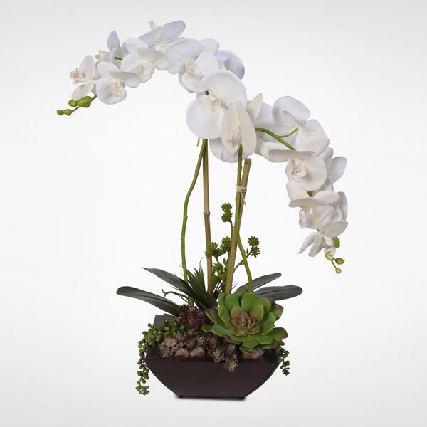 Handmade Phalaenopsis Silk Orchids with Succulents Floral Arrangement in Planter by Latitude Run