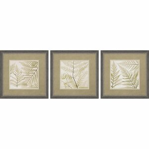 Ferns 3 Piece Framed Graphic Art Set by Paragon