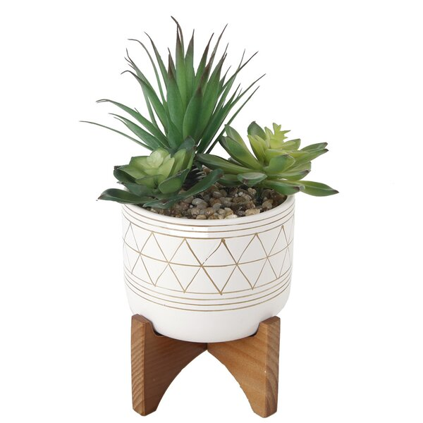 Desktop Succulent Plant in Pot by Bungalow Rose