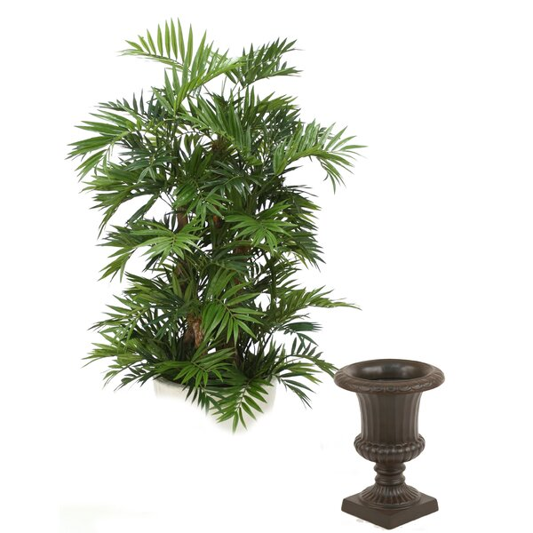 Parlor Palm Tree in Urn by Distinctive Designs