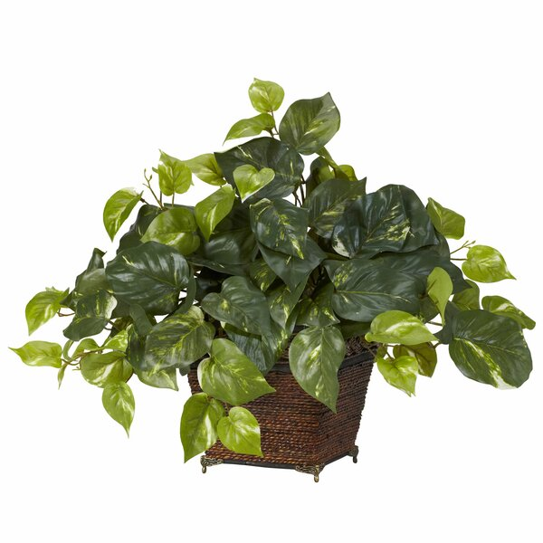 Pothos Desk Top Plant in Planter by World Menagerie
