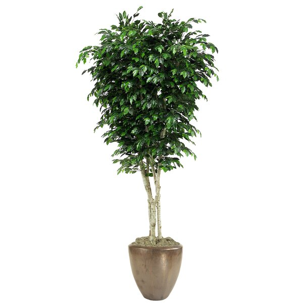 Topiary Ficus Tree in Pot by Distinctive Designs