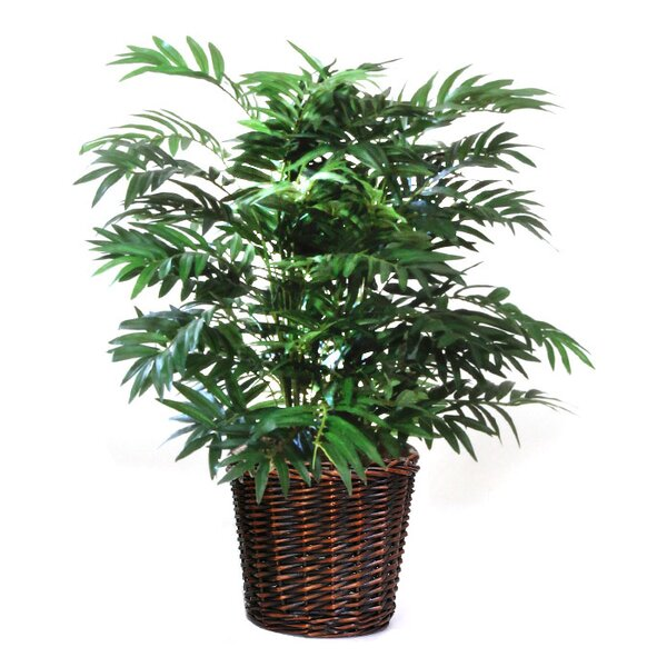 Parlour Palm Floor Plant in Basket by Dalmarko Designs
