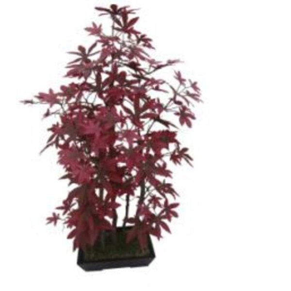 Bonsai Inspired Decorative Leaved Japanese Maple 31 Floor Ficus Tree in Planter by The Holiday Aisle
