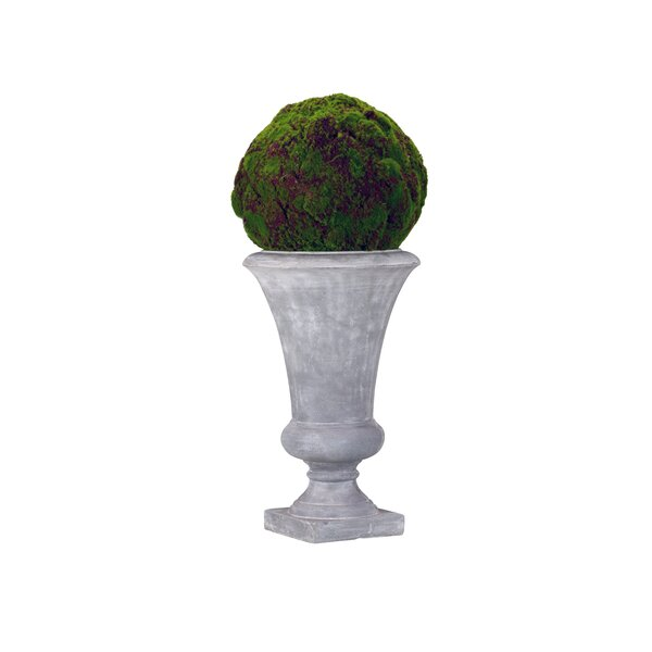 Moss Ball Cement in Urn by Astoria Grand