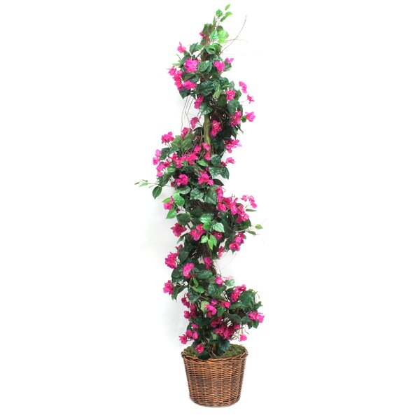 Bougainvillea Spiral Topiary in Basket by August Grove