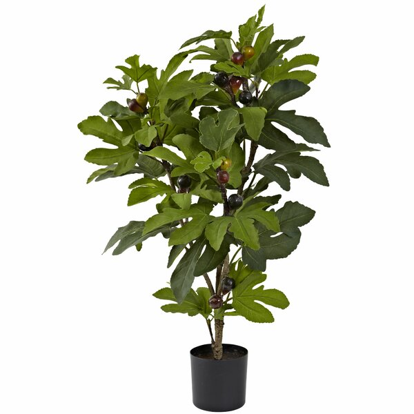 Fig Tree in Pot by Fleur De Lis Living