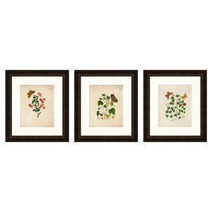 Kappa 3 Piece Giclée Framed Graphic Art Set by Darby Home Co