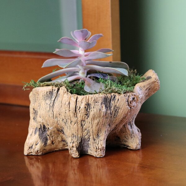 Paquin Squatty Stump Concrete Pot Planter by Bloomsbury Market