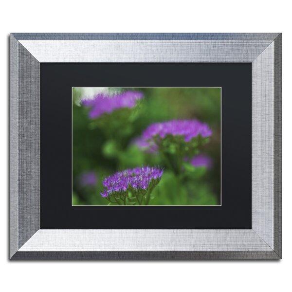 Purple Seedum by Kurt Shaffer Framed Photographic Print by Trademark Fine Art