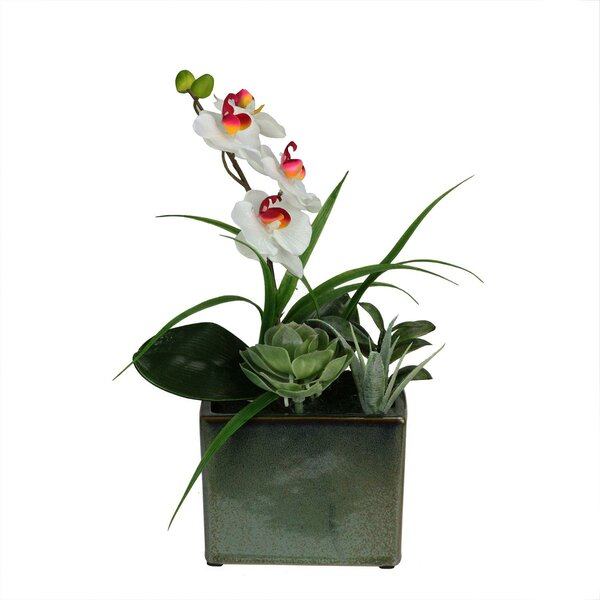 Artificial Spring Time Easter Orchid and Succulents Floral Arrangement in Planter by Bloomsbury Market