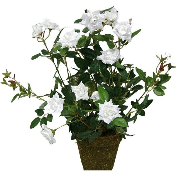 Tall Diamond Rose Bush Floral Arrangement in Plastic Pot by Charlton Home